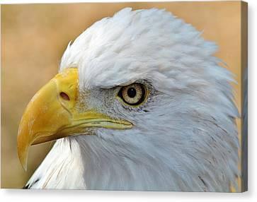 Eagle Eye 2 Canvas Print by Alexander Spahn