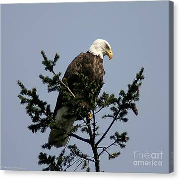 Canvas Print featuring the photograph Eagle Eye Vista by Mitch Shindelbower