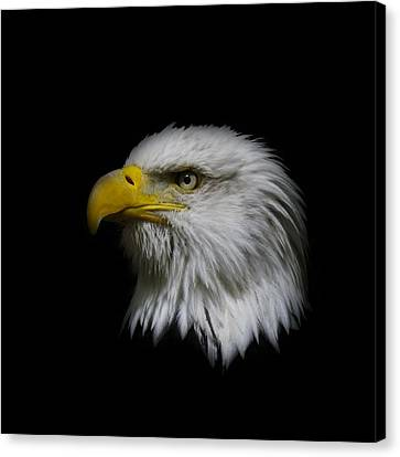 Canvas Print featuring the photograph Eagle Head by Steve McKinzie