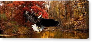 Canvas Print featuring the photograph Eagle In Autumn Splendor by Randall Branham