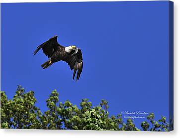 Canvas Print featuring the photograph Eagle Over The Tree Top by Randall Branham