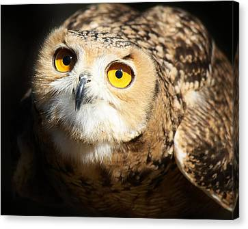 Eagle Owl Canvas Print by Paulette Thomas