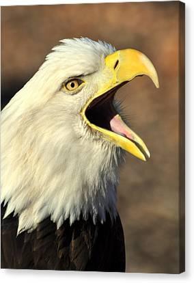 Eagle Squawk Canvas Print by Marty Koch
