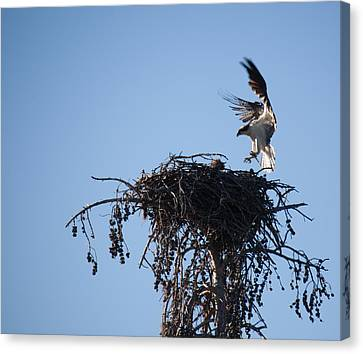 Eagle's Nest Canvas Print by Ralf Kaiser