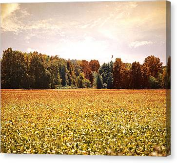 Early Autumn Harvest Landscape Canvas Print by Jai Johnson