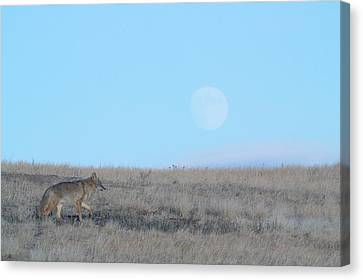 Early Hunt Canvas Print