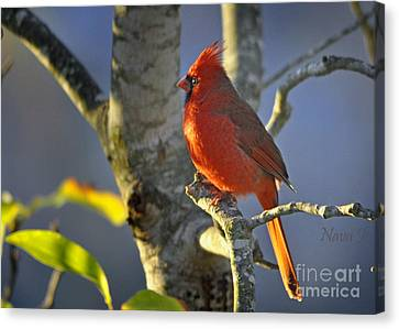 Canvas Print featuring the photograph Early Morning Cardinal by Nava Thompson