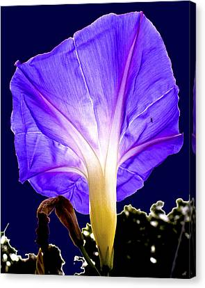 Early Morning Glory Canvas Print by Roy Foos