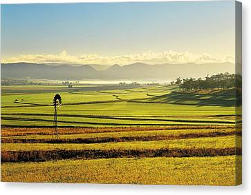 Early Morning Pastoral Scene With Keyline Plowing Near Warwick, Queensland, Australia Canvas Print by Peter Walton Photography