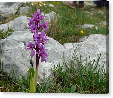 Canvas Print featuring the photograph Early Purple Orchid by Rob Hemphill