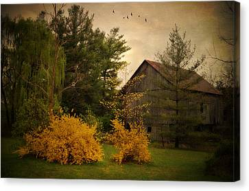 Early Spring Canvas Print by Kathy Jennings