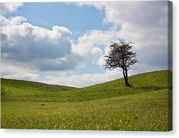 Early Spring Canvas Print by Semmick Photo
