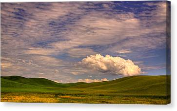 Early Summer Wheat In The Palouse Canvas Print by David Patterson