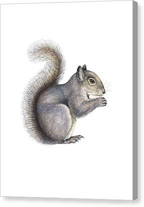 Eastern Grey Squirrel, Artwork Canvas Print