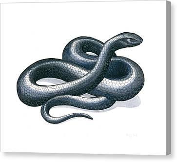 Eastern Indigo Snake Canvas Print by Anna Bronwyn Foley