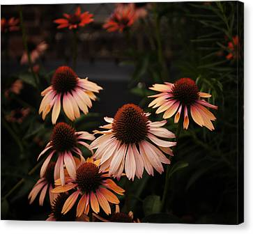 Peaches Canvas Print - Echinacea Flowers Along The High Line Park - New York City by Vivienne Gucwa