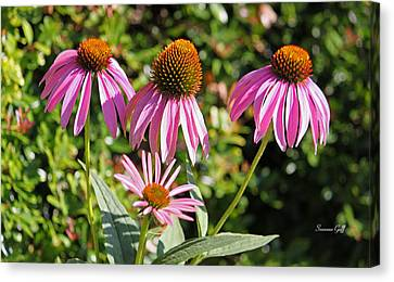 Echinacea In A Row Canvas Print