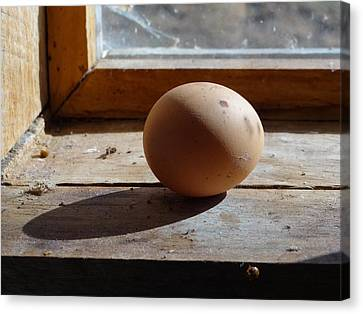 Canvas Print featuring the painting Egg On A Window Ledge by Carol Berning