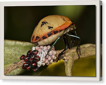 Canvas Print featuring the digital art Eggs Hatched 02 by Kevin Chippindall