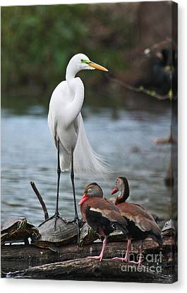 Canvas Print featuring the photograph Egret - Best Friends by Luana K Perez