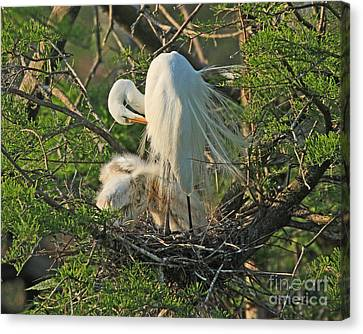 Canvas Print featuring the photograph Egret - Mother And Baby Egrets by Luana K Perez
