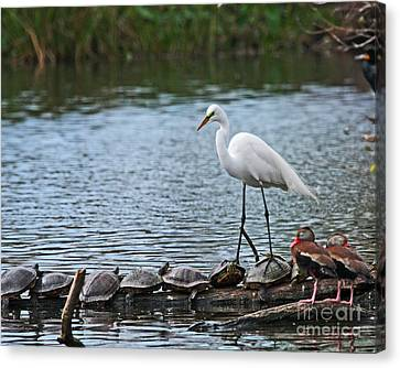 Canvas Print featuring the photograph Egret Bird - Supporting Friends by Luana K Perez