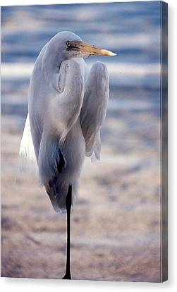Canvas Print featuring the photograph Egret Key West by Denise Moore