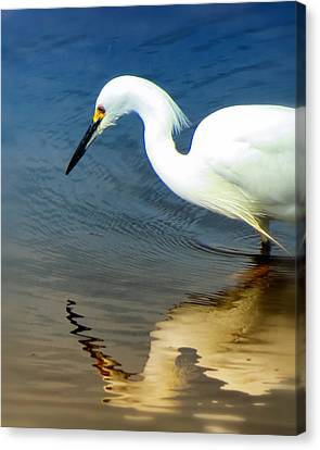 Egret Reflected Canvas Print by Diane Wood