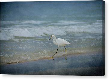 Egret Canvas Print by Sandy Keeton