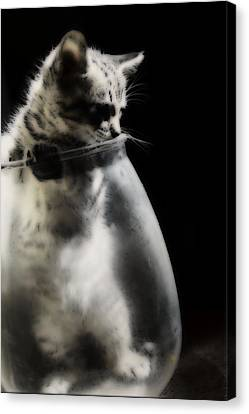 Canvas Print featuring the photograph El Kitty by Jessica Shelton