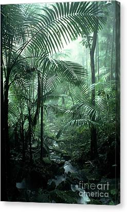 El Yunque National Forest Palms And Stream Canvas Print by Thomas R Fletcher