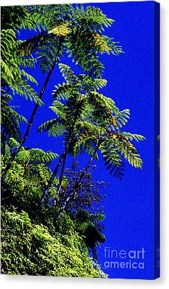 El Yunque Tree Ferns Canvas Print by Thomas R Fletcher