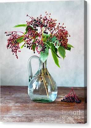 Elderberries 06 Canvas Print by Nailia Schwarz