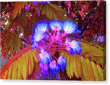 Electric Mimosa Canvas Print by Juliana  Blessington