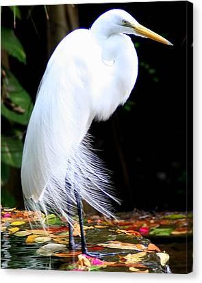 Elegant Egret At Water's Edge Canvas Print by Laurel Talabere