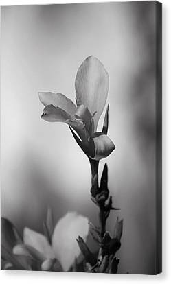 Elegantly Canvas Print by Laurie Search