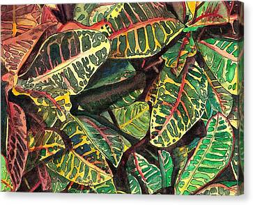 Elena's Crotons Canvas Print by Marionette Taboniar