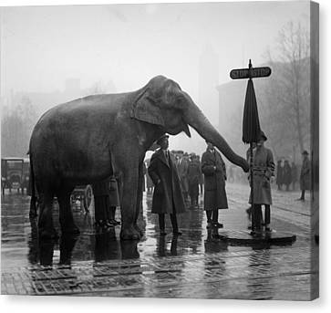 Stop Sign Canvas Print - Elephant, And Stop Sign On A Wet Day by Everett