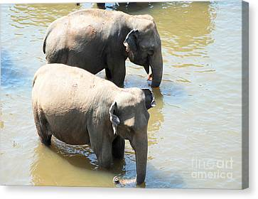 Canvas Print featuring the photograph Elephants In Water by Pravine Chester