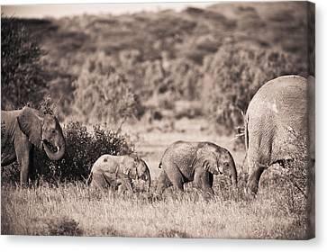 Elephants Walking In A Row Samburu Kenya Canvas Print by David DuChemin