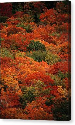 Elevated View Of Autumn Foliage Canvas Print by Raymond Gehman