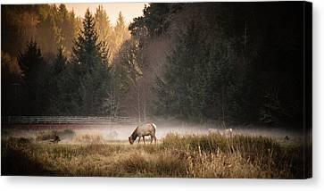 Elk Camp Canvas Print by Randy Wood
