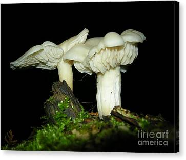 Elm Oysters Canvas Print