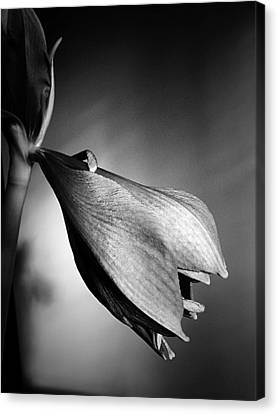 Emerging In Black And White Canvas Print by Beth Akerman