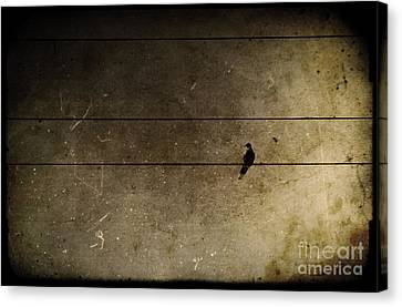Emotional Distance Canvas Print by Andrew Paranavitana
