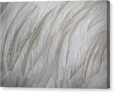 Emu Feathers Canvas Print by Paulette Thomas