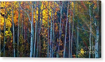 Enchanted Aspen Canvas Print