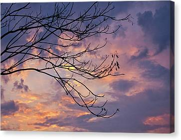 Enchanted Evening Canvas Print by Rachel Cohen