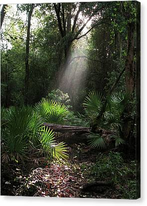 Enchanted Forest Canvas Print by Peg Urban