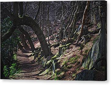 Enchanted Forest Canvas Print by Steve Watson